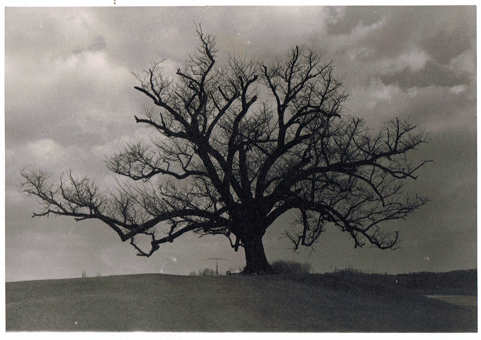 the hanging tree Hanging people for small crimes as well as grave, the bloody penal code was at its most active between 1770 and 1830 in those years some 7,000 men and women were executed on public.